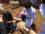 Il sistema veterinario di formazione immagine di ultrasuono per formazione immagine di gravidanza del cavallo, della mucca, dei bovini, del cane, del gatto, degli ovini, della capra, ecc, scanner veterinario di ultrasuono, controlla ultrasonico