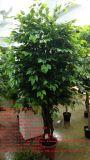 Migliori piante artificiali di vendita dell'albero Gu1468594694797 del Ficus