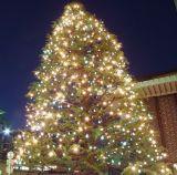 Rete Lightsck dell'albero di Natale di CliLED insonorizzato e pavimentazione di bambù naturale verticale di Quakeproof