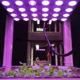 37W LEDはプラント耕作のための軽いモジュールを育てる