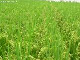 アミノ酸のキレート化合物亜鉛有機肥料