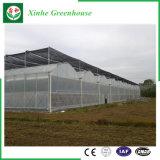 Muti Überspannung Venlo Polycarbonat-Blatt-Gewächshaus PC Gewächshaus für Gemüse