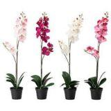I migliori fiori artificiali di vendita dell'orchidea naturale di tocco lascia Gu-Jy902123107
