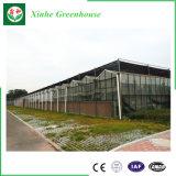 Invernadero de cristal galvanizado de la estructura de acero para Growing vegetal