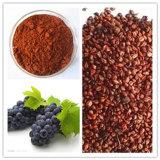 Выдержка семени завода Extract/OPC/Grape расшивы сосенки высокого качества