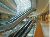 Escalera mecánica de alta resistencia para el Centro de Transporte Público