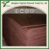Shandong fabricante de muebles de calidad comercial de la madera contrachapada / Decorar Ply blanqueada de álamo contrachapado (el mejor precio)