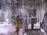 Vieh-Gemetzel-Maschine