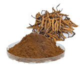 Cordyceps Sinesis Auszug Cordycepin 1% Gleiskettenfahrzeug-fungöser Auszug