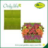 Planteur s'arrêtant de planteur vertical économique de mur d'Onlylife dans beaucoup de couleurs