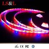 La pianta del LED coltiva l'indicatore luminoso di striscia con DC12/24V 60LEDs/M Ce&RoHS