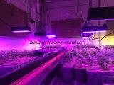 Piante orticole potenti di illuminazione che coltivano gli indicatori luminosi del LED