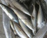 Китайской замерли фабрикой, котор Тихие океан рыбы скумбрии