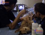 Equipamentos veterinários, ultra-som portátil para Uso Veterinário, ultra-som de EFP