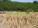 Bastones de bambú de bambú naturales de Tonkin para la planta