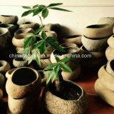 Potenciômetro da Pedra Natural da China para Flower