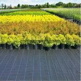 工場価格の中国の景色のPPによって編まれるGeotextileの/Groundの庭カバー/Weedのマットファブリック