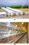 La volaille renferment avec le matériel de ferme de poulet d'ensemble complet