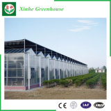 Sistema di coltura idroponica della serra dello strato del PC per gli ortaggi/fiori/frutta