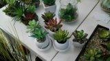 Gu1470567499678의 베스트셀러 인공적인 Succulents