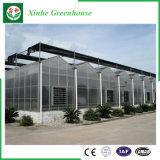 Handelsglasgewächshaus mit Wasserkultursystem für Gemüse