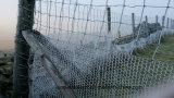 Rete fissa della rete metallica del pollo di Sailin