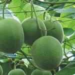 Edulcorante Natural Luohanguo Monkfruit Extracto Extracto para alimentación