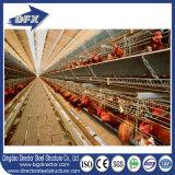 Camada da casa de galinha para o cultivo de aves domésticas com equipamento