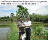 Additivo di miglioramento di qualità dell'acqua per l'allevamento acquatico