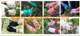 Van de Katoenen van de Kleur van Ddsafety 2017 de Groene Handschoen van de Tuin van de Punten van het Manchet het Tuinieren Band