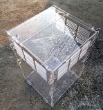 Terrarium acrilico del rettile per il Testudo. della lucertola del serpente