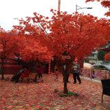 Landschap van de tuin simuleerde de Rode Boom van de Esdoorn