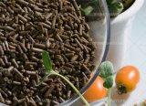 Le thé de graines de thé Pellet, graine repas