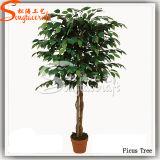 高品質の装飾(TH-21)のための人工的なフィカスのプラント木