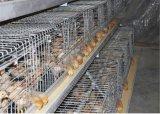 Le matériel automatique de petites de poulet de ferme de batterie cages de cages chaud/froid a plongé le fil d'acier galvanisé (un type)