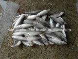 Ensemble de poisson congelés ronde Chinchard