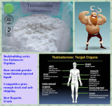 Tester Unde Raw Steroids Powder Testosterone Undecanoate pour Muscle Building