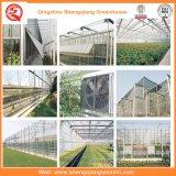 野菜のためのガラス温室のHydroponicsシステムか花またはフルーツ