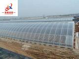 식물성 성장하고 있는을%s 플레스틱 필름 태양 온실