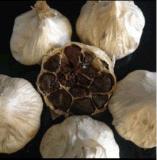 12 bulbos fermentaram o alho preto inteiro para a receita da galinha