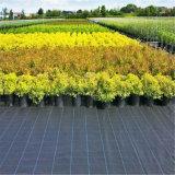 Stuoia cinese di controllo di Weed del giardino 90g/100g con l'alta qualità dal prezzo di fabbrica