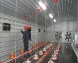 De Loods van de Kip van Prebab met Automatische Gecontroleerde Apparatuur
