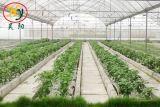 De Serre van de Film van de tuin voor Aardappel