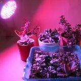 O diodo emissor de luz morno do branco cresce a ampola para a planta da flor
