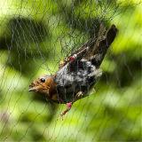 HDPEの伝染性の鳥のネットのための反鳥の網