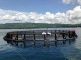 Cage de mer de HDPE/PE pour l'aquiculture de flottement de mer de Chine