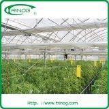 Multi commerciale Span Film Greenhouse per Tomato