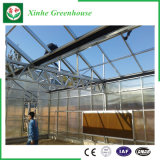 De tuin/het Landbouwbedrijf/de Groene Huizen van het Glas van de multi-Spanwijdte van de Tunnel voor namen/Aardappel toe
