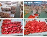 Hijstoestel van de Keten van het Merk 500kg van Kixio het Elektrische met Ce, ISO- Certificaten