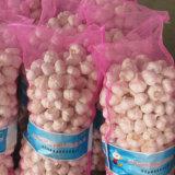 Ослабление мешок упаковка свежих белых чеснок